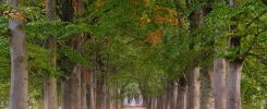 """Signs of Autumn appear in the trees at Schaloensvoetpad, a nice avenue near Kasteel Schaloen (Oud-Valkenburg, Limburg). This path leads to """"De Drie Beeldjes"""", just visible in the far diatance. (2017)"""